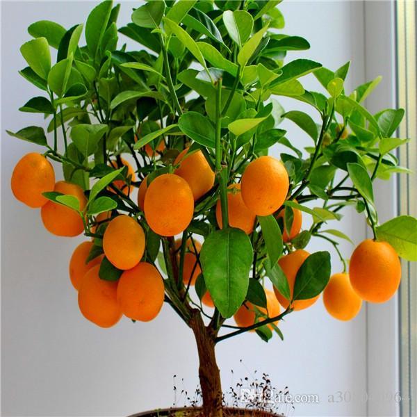 6 of the Best Indoor House Plants