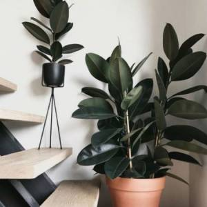6 Of The Best Indoor House Plants